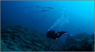 Scuba diving in Spain - Photo by antwelm